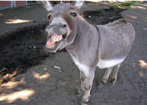 1100419-donkey