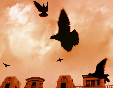 """Freedom."" Photo illustration via Wylio http://bit.ly/xAJy0A"