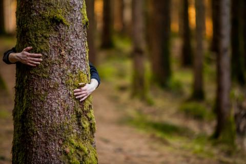 Tree hugger, Andrei S / Shutterstock.com