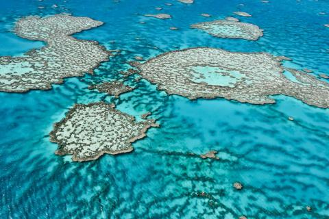 RIP Great Barrier Reef