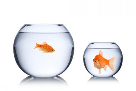 Envy concept, stockphoto-graf / Shutterstock.com