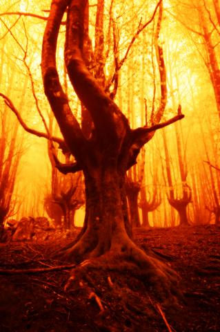 A tree on fire. Image courtesy Mimadeo/shutterstock.com
