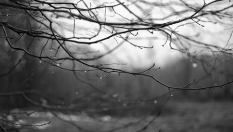 Bare branches in the rain. Image courtesy PunctRo/shutterstock.com