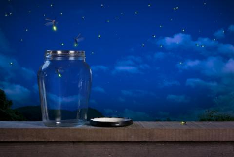 Fireflies in the night. Image courtesy Fer Gregory/shutterstock.com.