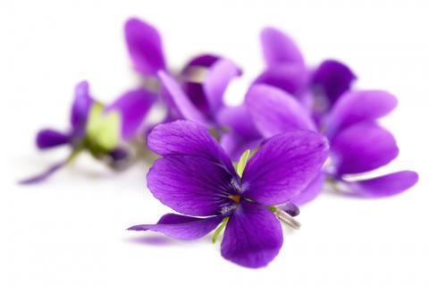 Purple flowers. Image courtesy Robyn Mackenzie/shutterstock.com