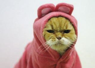 Grumpy kitty. Image via Tumblr.