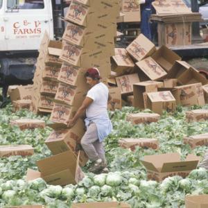 Photo: Migrant farm workers in California, spirit of america / Shutterstock.com