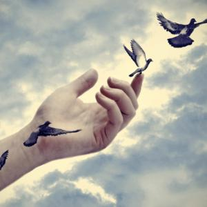 Bird tattoos come to life, Marianne D / Shutterstock.com