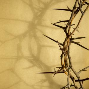 Crown of thorns. Image via Ricardo Reitmeyer/shutterstock.com