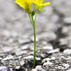 Flower growing out of crack in asphalt, Elena Elisseeva / Shutterstock.com