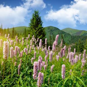 Mountain scenery, Nataliia Melnychuk/ Shutterstock.com