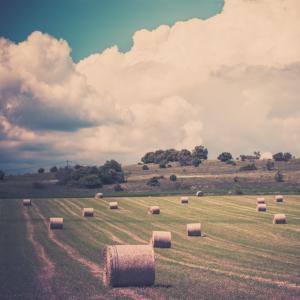 Farm landscape, dvoevnore / Shutterstock.com