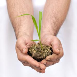 Hands hold a seedling. Image courtesy AlessandroZocc/shutterstock.com.