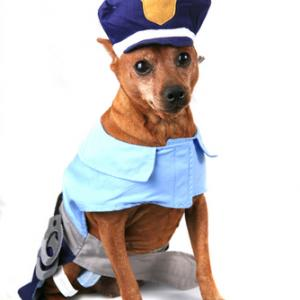 Look out. There's a new sheriff in town. Image via Katrina Brown / Shutterstock