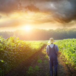 Farmer walking in a corn field, Sandra Cunningham / Shutterstock.com