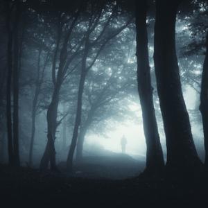 Dark forest path, andreiuc88 / Shutterstock.com