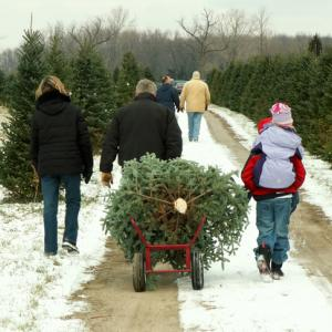 Photo: Family lugging their freshly cut tree, © Lori Sparkia/ Shutterstock.com