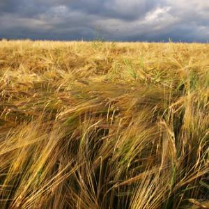 Field image by eurospiders/Shutterstock.