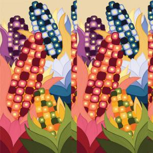 Image of multicolored ears of corn
