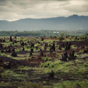 Deforestaion