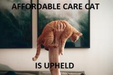 'Affordable Care Cat is Upheld' via the new blog affordablecarecat.com