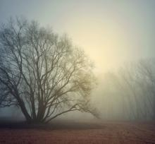 Fog and light photo, lussiya  / Shutterstock.com