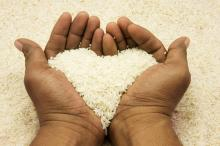 Hands holding rice, imanhakim / Shutterstock.com