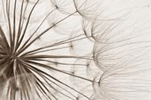 MaestroPhoto / Shutterstock.com