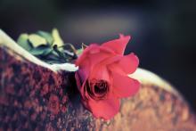 A rose on a stone. Image courtesy wrangler/shutterstock.com