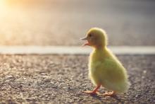 nanD_Phanuwat / Shutterstock.com