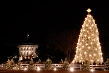 Photo: National Christmas Tree, © Robert Crow / Shutterstock.com