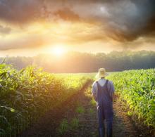 Farmer walking in a corn field, Sandra Cunningham / Shutterstock.com