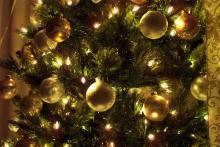 Photo: Christmas tree, © Jennifer Nickert / Shutterstock.com