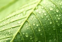 Leaf detail,  alexskopje / Shutterstock.com