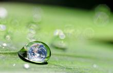Sustainability image, danymages / Shutterstock.com