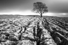 Desolate landscape, Phil MacD Photography / Shutterstock.com