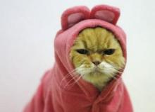 Grumpy kitty. Image via Tumblr.