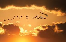 Delmas Lehman / Shutterstock