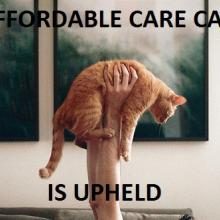 'Affordable Care Cat is Upheld' via the new blog affordablecarecat.com