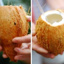 Coconut vessels. Images via Wylio.