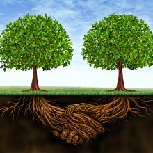 Deep connected roots. Image courtesy Lightspring/shutterstock.com
