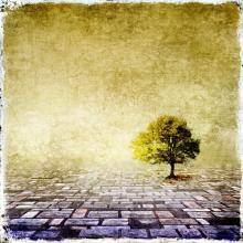 Tree image, Rudy Bagozzi / Shutterstock.com