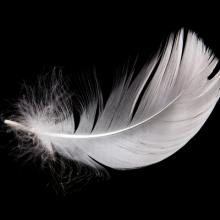 An isolated white feather. Image courtesy EMprize/shutterstock.com.