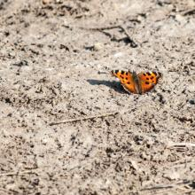 A butterfly settles on the dust. Image courtesy Romas_Photo/shutterstock.com.