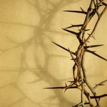 Crown of thorns. Image via Ricardo Reitmeyer/shutterstock.com