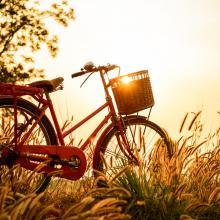 Image via anawat sudchanham/shutterstock.com
