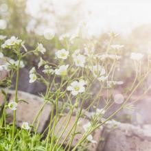 Garden photo, VICUSCHKA / Shutterstock.com