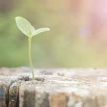 New growth, Phonlawat_778 / Shutterstock.com