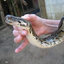 Snake handling image via Arie v.d. Wolde/ Shutterstock
