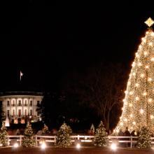 Photo: National Christmas Tree, © Robert Crow / Shutterstock.com